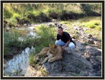 walk with lions lionsafaris